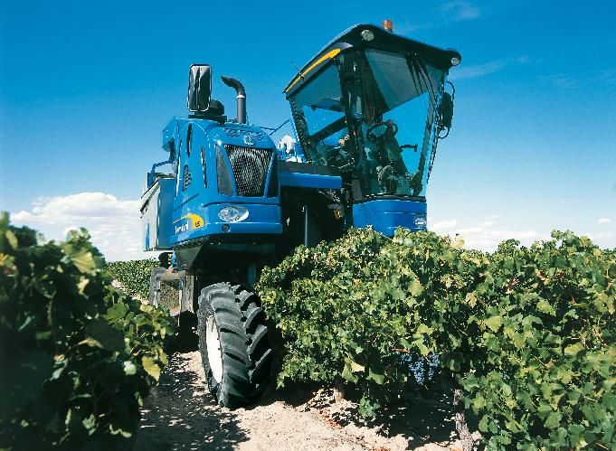 Vendemmia selettiva, la strategia vincente