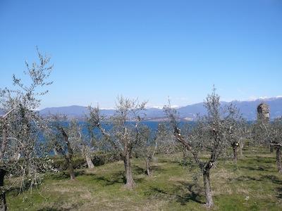 OLIVETO-DI-CATULLO-RECUPERATO