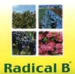RadicaBpic