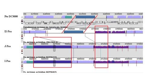Sequenza-genoma-Psa-kiwi
