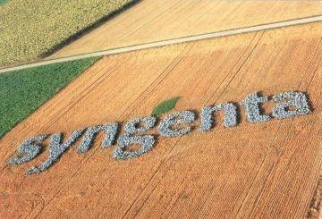 Syngenta-campo-logo