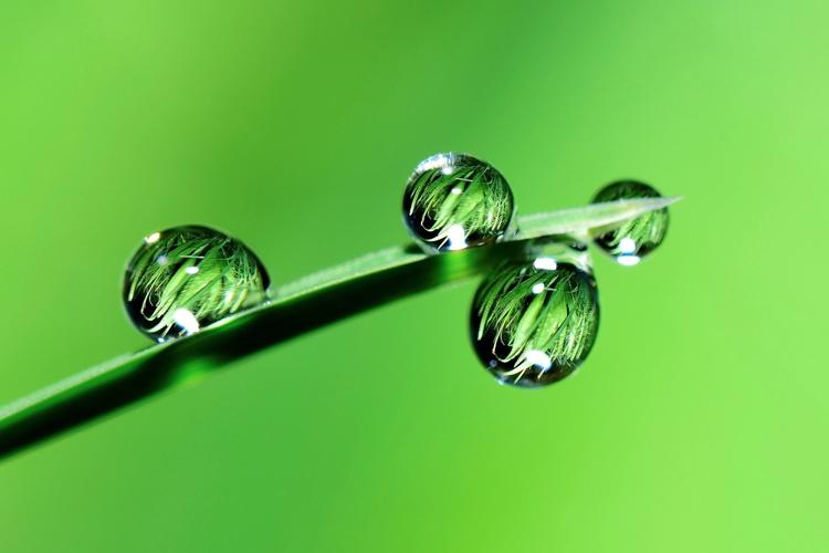 Subirrigazione: più efficienza con meno acqua - Plantgest news sulle varietà di piante