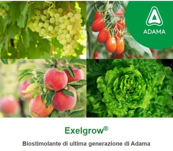 adama-exelgrow-2021