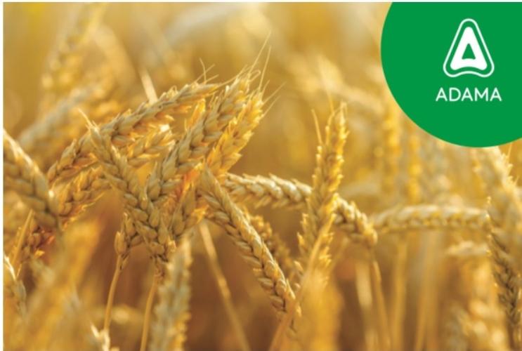 adama-linea-cereali.jpg