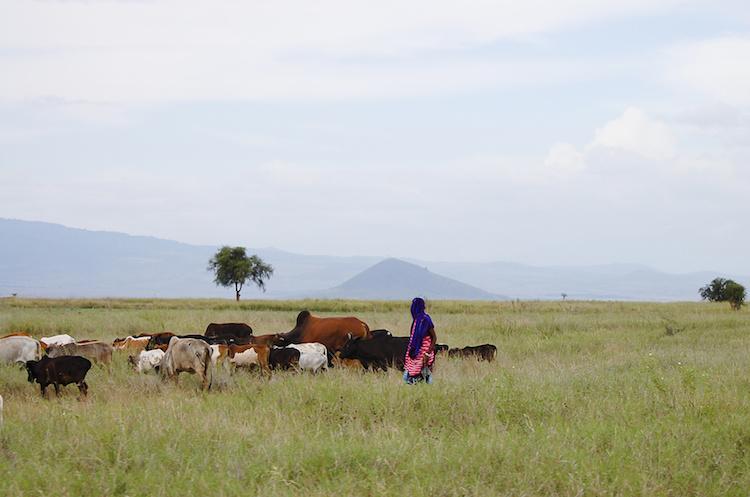 africa-tanzania-by-adwo-fotolia-750