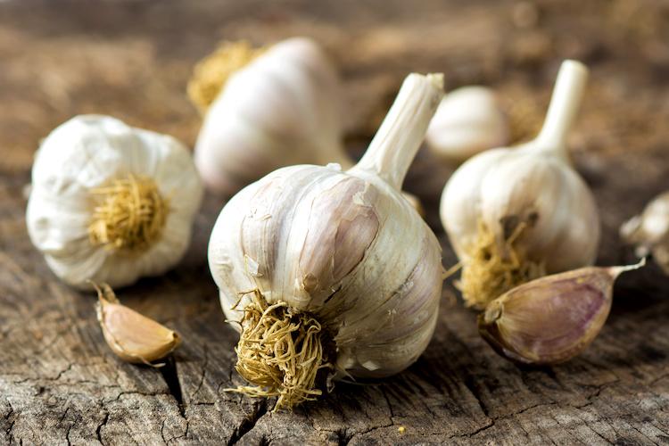 Aglio, l'oro bianco (e ora anche nero) - Plantgest news sulle varietà di piante