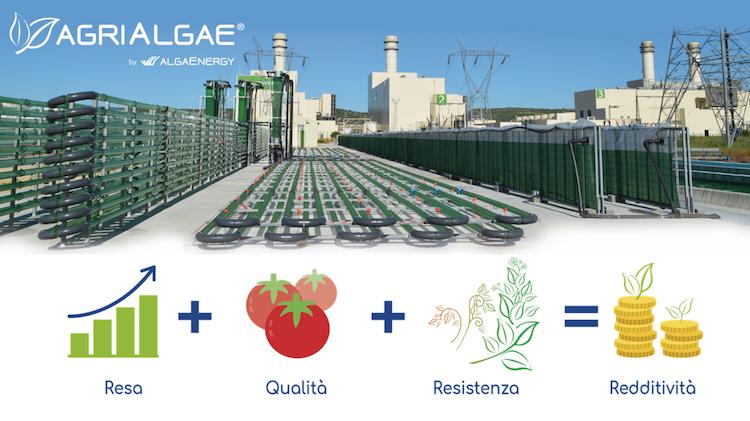 agrialgae-algaenergy-alghe-fonte-algaenergy.png