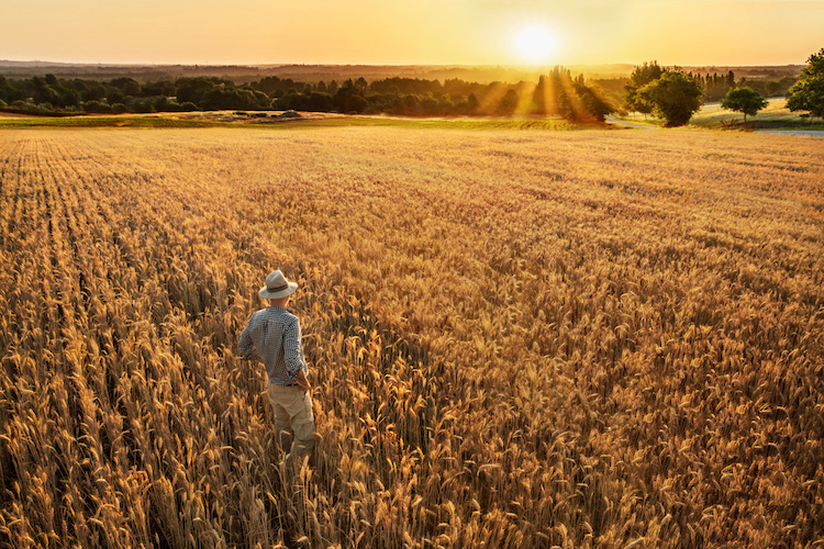 agricoltore-campo-grano-agricoltura-by-jackfrog-adobe-stock-750.jpeg