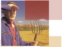 agricoltore-campo-grano-giovane-250