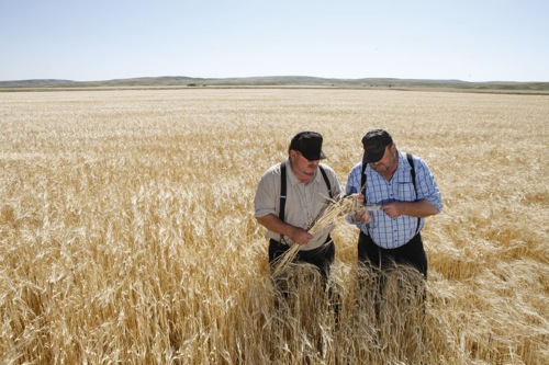 agricoltori-campo-orzo-foto-by-syngenta.jpg