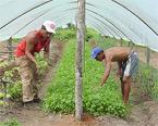 agricoltori-immigrati2