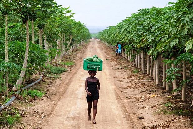 agricoltura-angola-fonte-macfrut