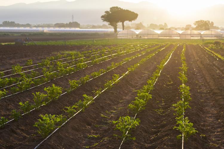 agricoltura-biologica-coltivazioni-biologiche-campo-by-asferico-fotolia-750.jpeg