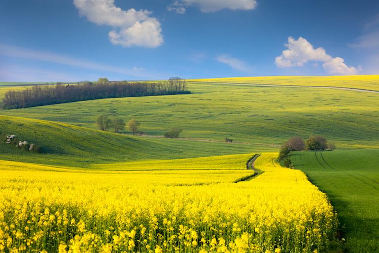 agricoltura-campi-campo-gilallo-colline-by-taiga-fotolia-750
