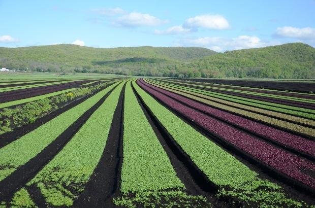 agricoltura-campi-morguefile-kconnors.jpg