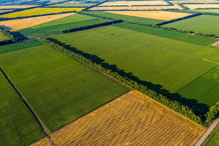 agricoltura-campo-by-artsvitlyna-adobe-stock-750x500