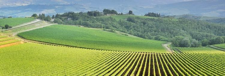agricoltura-campo-campi-collina-by-daniele-pietrobelli-fotolia-750x253.jpeg