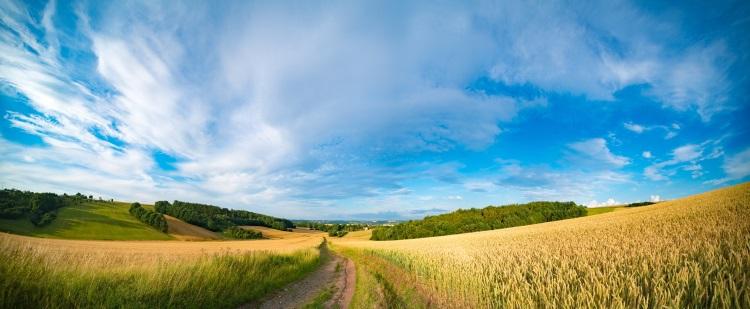 agricoltura-campo-grano-by-luchschenf-adobe-stock-750x309