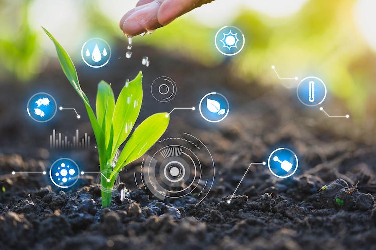 agricoltura-digitae-pianta-dati-tecnologie-worawut-adobe-stock-750x500.jpeg
