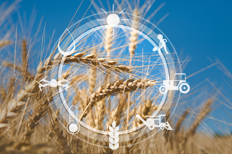 agricoltura-digitale-di-precisione-by-prostock-studio-adobe-stock-750x500