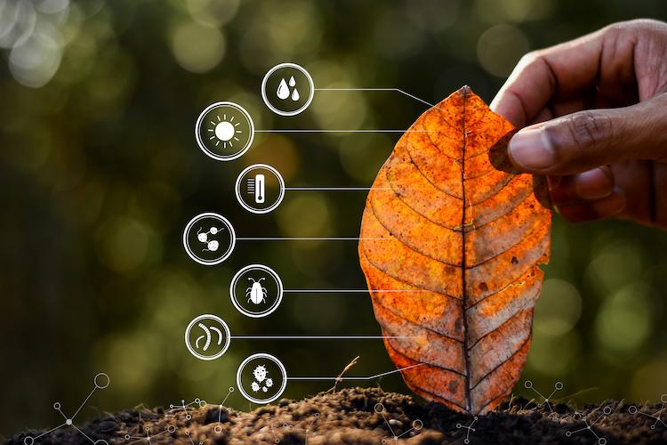 agricoltura-digitale-foglia-tecnologie-residui-vegetali-microrganismi-by-994yellow-adobe-stock-750x5001.jpeg