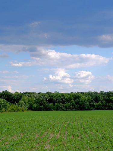 agricoltura-generica-moeguefile-bosela