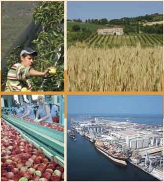 agricoltura-tradizione-innovazione-agrilineanews-28-ottobre