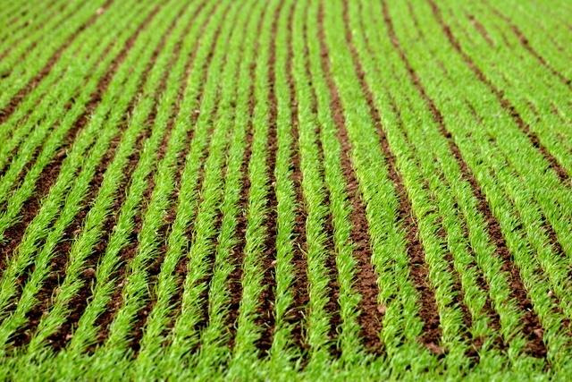 agricoltura31
