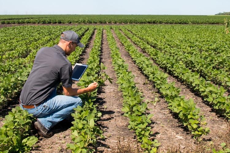 agronomo-agronomi-tablet-campo-soia-agricoltura-digitale-497029784522c08949da6c-by-united-soybean-board-flickr-creative-commons-4-0-alcuni-diritti-riservati