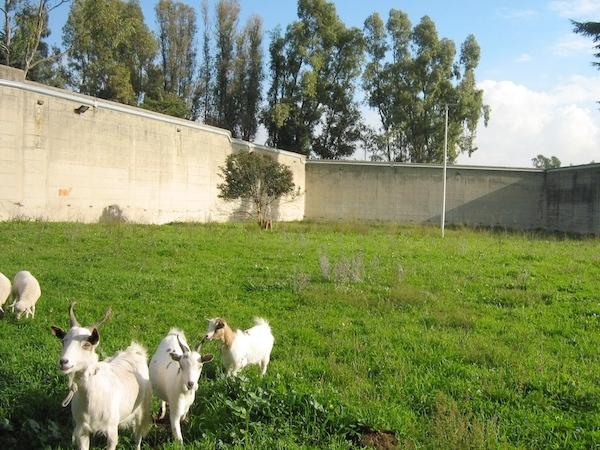 aiab-carcere-minorile-roma-progetto-piantiamo-valori