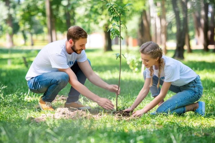 alberi-piante-giovani-pianta-albero-by-lightfieldstudios-adobe-stock-749x500