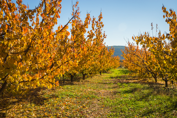 alberi-post-raccolta-autunno-fonte-shutterstock-427788307-via-green-has.jpg