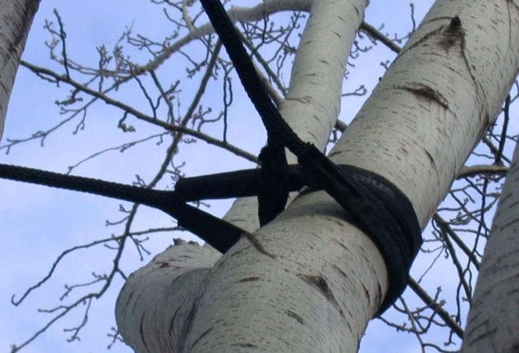 alberi_citta_verde_urbano