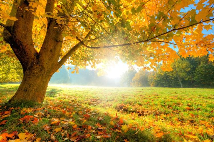 albero-alberi-by-jag-cz-fotolia-750