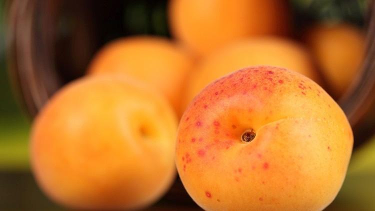 albicocca-albicocche-fonte-cso