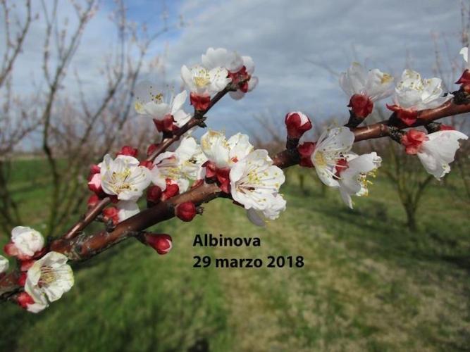 albinova-varieta-pesco-fonte-geoplant.jpg