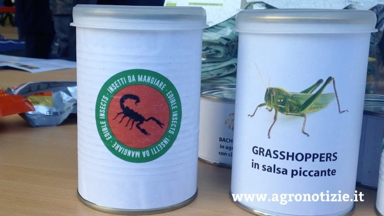 alimentazione-expo-insetti-fonte-tommaso-cinquemani-agronotizie