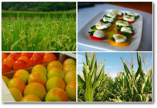 alimenti-alimentazione-cibi-mela-riso-mais-mozzarella-verdure-byil.jpg