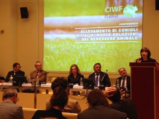 allevamento-conigli-conferenza-ott-16-fonte-ciwf-italia-onlus