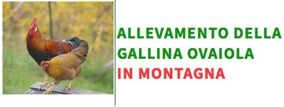 allevamento-gallina-ovaiola-in-montagna-20170303.jpg