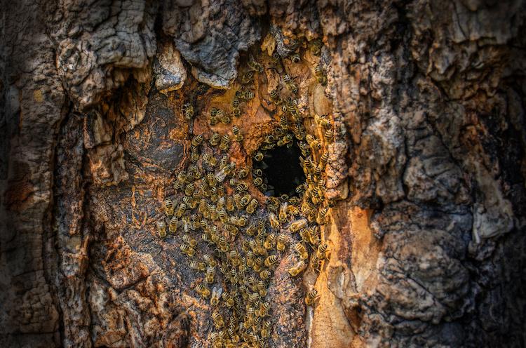 alveare-api-albero-by-vera-kuttelvaserova-adobe-stock-750x4961