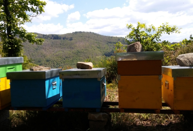 alveari-api-apiario-by-matteo-giusti-agronotizie-jpg