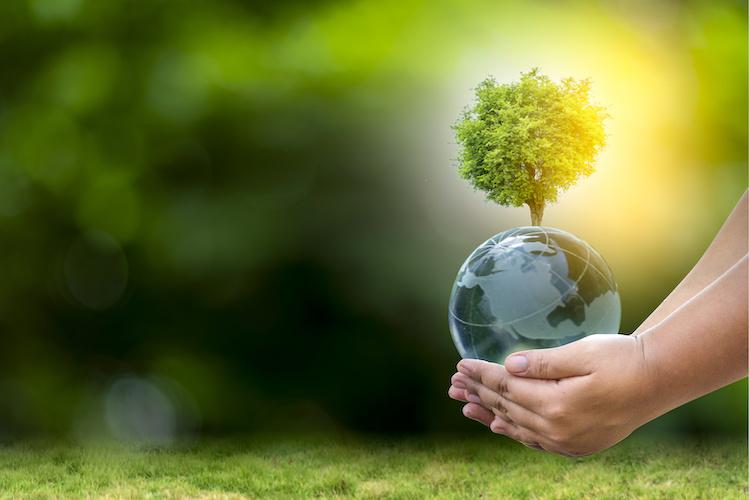 ambiente-pianeta-green-albero-by-surasak-adobe-stock-750x500