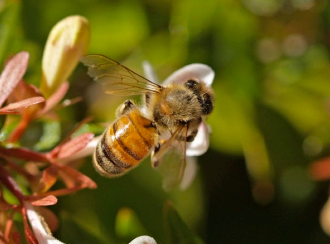ape-fiore-morguefile-rollingroscoe.jpg