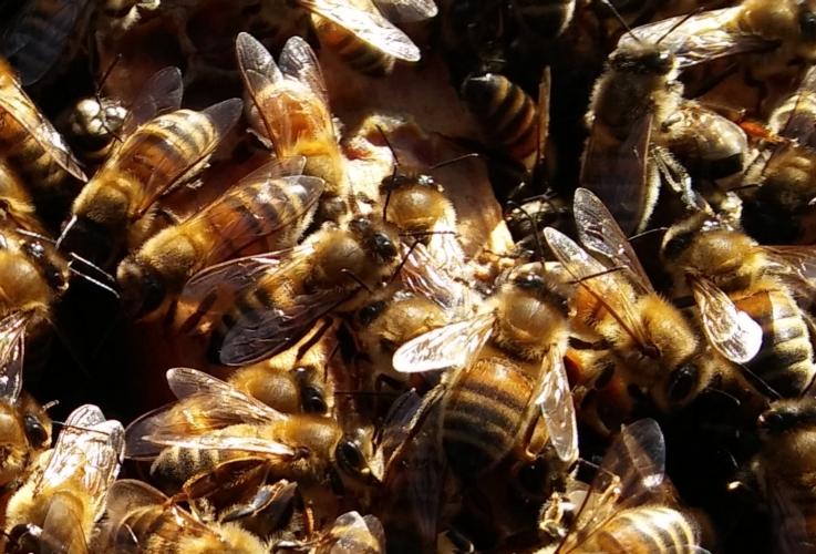 api-alveare-by-matteo-giusti-agronotizie-jpg