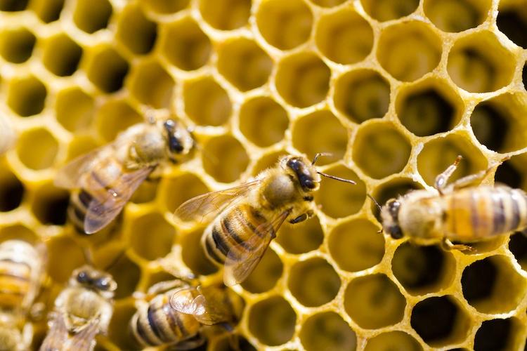 api-ape-alveare-alveari-by-arinahabich-fotolia-750