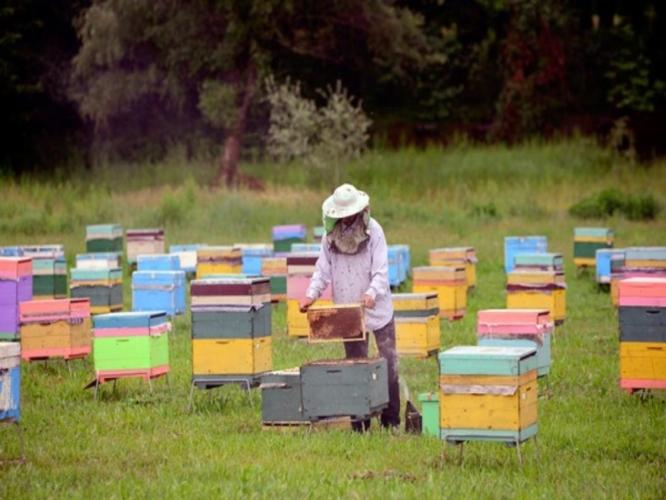 api-apiario-by-fao-jpg.jpg