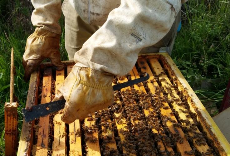 api-apicoltura-apicoltore-by-matteo-giusti-agronotizie-jpg.jpg