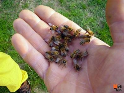 api-cra-foto-per-gentile-concessione-mieli-thun