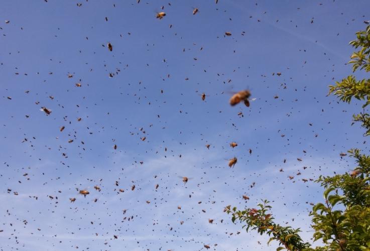 api-volo-sciame-by-matteo-giusti-agronotizie-jpg.jpg